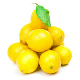 Lemons family Stock Photography