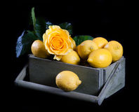 Lemons with flowers Stock Photos