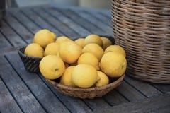 Lemons. Fresh picked lemons in a wicker plate Stock Image