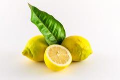 Lemons. Fresh lemons yellow and green on white background Stock Image