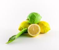 Lemons. Fresh lemons yellow and green on white background Royalty Free Stock Photos