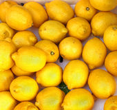 Lemons Stock Photo