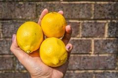 Lemons on hand Stock Images