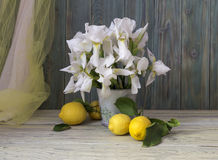 Lemons and irises in a vase. Rustic still-life with white, garden irises and lemons on a wooden table close-up Stock Photos