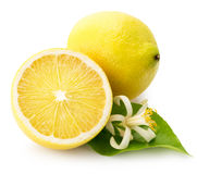 Lemons isolated on the white background Royalty Free Stock Images