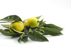 Lemons isolated on white Stock Photography