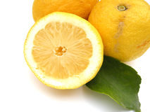 Lemons with leaf  Royalty Free Stock Photos