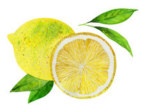 Lemons with leaves Stock Image