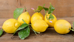 Lemons with leaves and flowers Stock Photo
