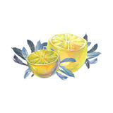 Lemons with leaves . Stock Photos
