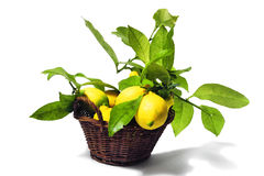 Lemons with leaves Royalty Free Stock Photo