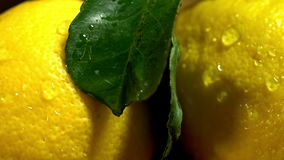 Lemons with leaves on wooden boards. stock video footage