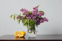 Lemons and lilac Royalty Free Stock Image