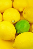 Lemons and lime background. Fresh lemons and single lime, still life background Royalty Free Stock Photos