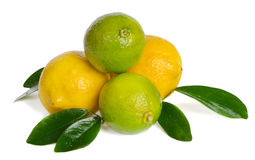 Lemons and limes Stock Photos