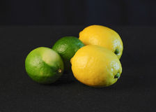 Lemons and Limes. Ripe and unripe lemons and limes against a black background Stock Images