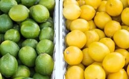 Lemon and Lime side by side Stock Photo
