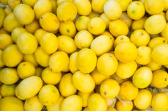 Lemons. A number of bright yellow lemons stock photos