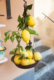 Lemons in a old balance Royalty Free Stock Images
