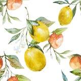 Lemons and oranges Royalty Free Stock Photo