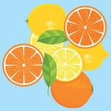 Lemons and Oranges Fruit Design. Oranges and lemons citrus fruit design with green leaves on a blue background vector illustration