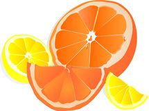 Lemons and Oranges illustration over white Royalty Free Stock Image