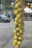 Giant lemons in southern Italy stock images