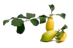 Lemons organic Royalty Free Stock Images