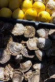Lemons and oysters. Yellow lemons and oysters in the market in Brittany, France Royalty Free Stock Photo