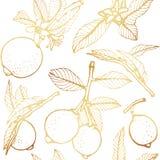 Lemons pattern with gold foil texture. Seamless lemons wallpapers. High resolution lemon illustration. Hand drawn lemons fruits, branches and flowers with gold royalty free illustration