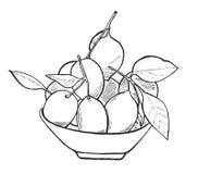 Lemons on a plate. Vector hand drawn monochrome lemons Royalty Free Stock Photo