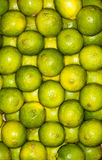 Lemons regular ordered pile background. Macro. Lemons on a regular background. Yellow and green. Photo taken with macro lens Royalty Free Stock Photo
