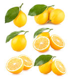 Lemons. Set of 6 lemon images stock photography