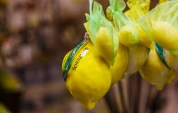 Lemons in Sorrento. Real and Ceramic Lemons Hanging in Sorrento Market royalty free stock photo