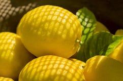 Lemons in summer sunshine Stock Photography