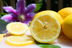 Lemons in the sunshine Royalty Free Stock Photo