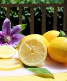 Lemons in the sunshine Royalty Free Stock Photos