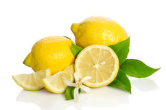 Lemons tree flower and a lemon Stock Photos