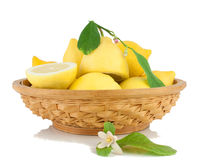 Lemons in a vase a blossoming branch of a lemon. Stock Photography