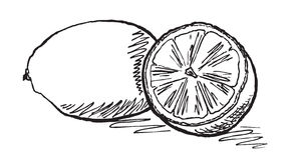 Lemons. Vector hand drawn monochrome lemons Stock Photo