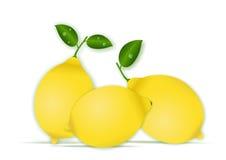Lemons. Vector illustration of lemons isolated on white background Royalty Free Stock Image