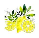 Lemons. Watercolor hand drawing illustration vector illustration