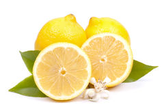 Lemons on white ground Stock Photos