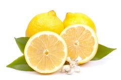 Lemons on white ground stock photos
