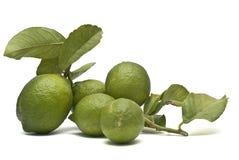 Lemons witn leaves. Stock Photo