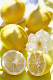 Lemons. On yellow background on summer day Royalty Free Stock Photography