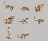 lemur royaltyfri illustrationer