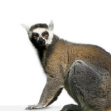 Lemur. In front of a white background Royalty Free Stock Photo