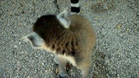 lemur metrajes