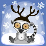 Lemur with antlers Royalty Free Stock Photo